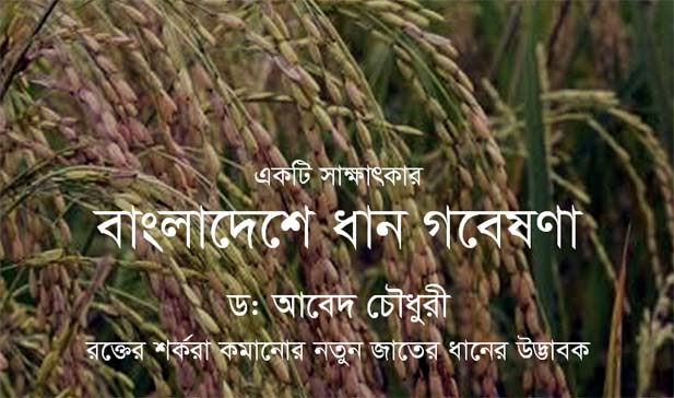Interview - Rice research in Bangladesh - Dr Abed Chaudhury, developer of new varieties that lower blood sugar level [Image: oryza.com]