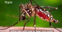 The Aedes mosquito that spread Dengue and Zika [Image: www.cdc.gov]